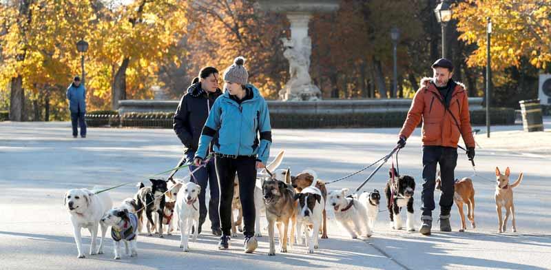 טיול עם כלבים / צילום: רויטרס, Paul Hanna
