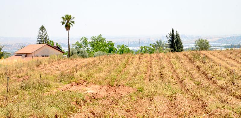 הפשרת קרקעות חקלאיות / צילום: תמר מצפי