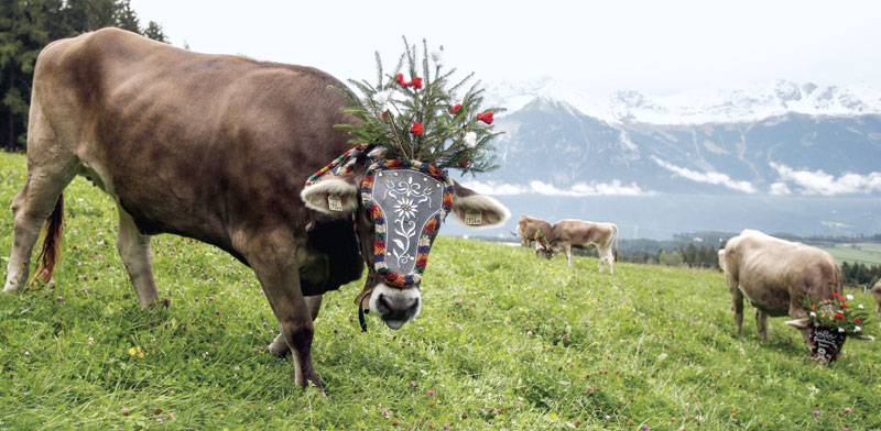 שטחי מרעה באלפים באוסטריה/ צילום: Dominic Ebenbichler / רויטרס