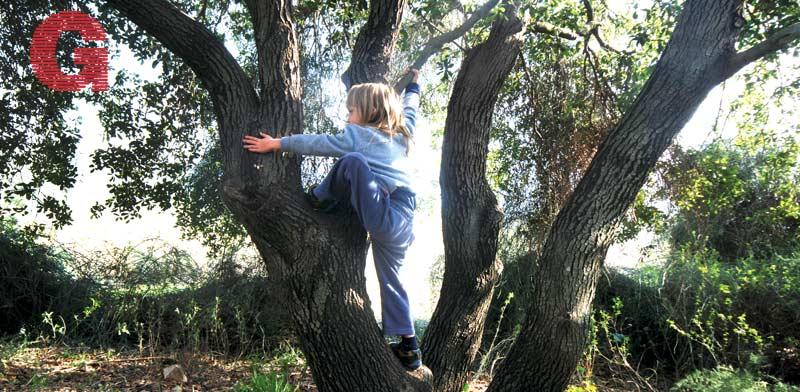 עץ הזית בצובה / צילום: יותם יעקבסון