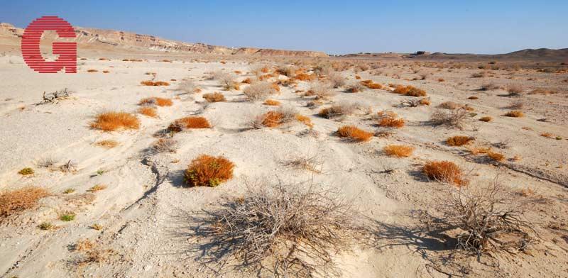 מלתעות במדבר / צילום: יותם יעקבסון