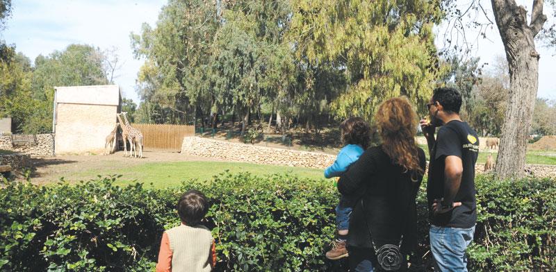 הספארי ברמת-גן / צילום: תמר מצפי