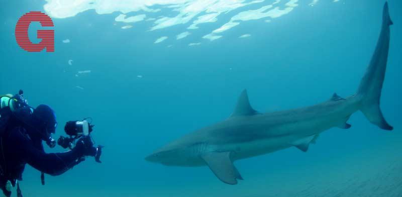 תפוס ת'כריש / צילום: Out Of The Blu