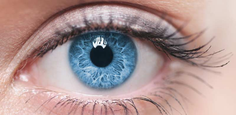 Eyesight Photo: Shutterstock