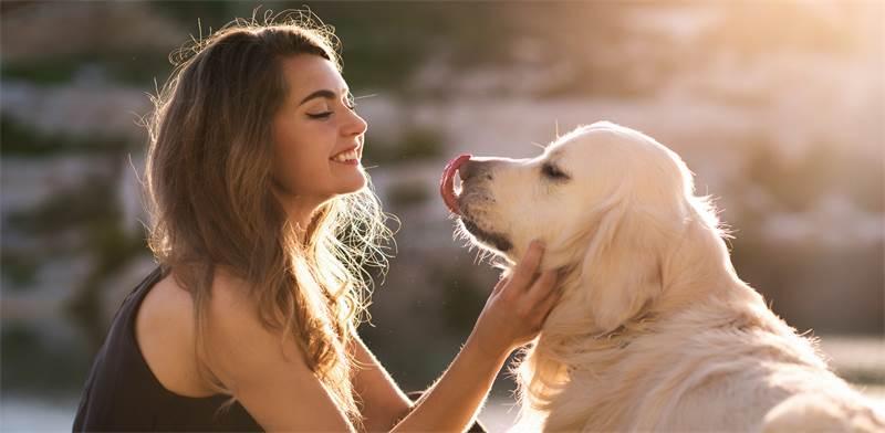 חיית מחמד / צילום: Shutterstock
