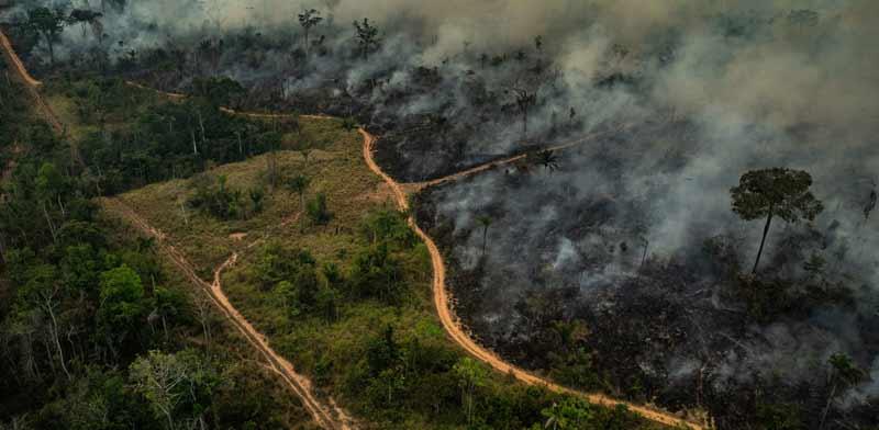 שריפה באמזונס /  צילום:  גרינפיס Victor Moriyama  גרינפיס