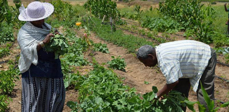 גדרה גינה חקלאית אתיופית/ צילום:  באדיבות חברים בטבע