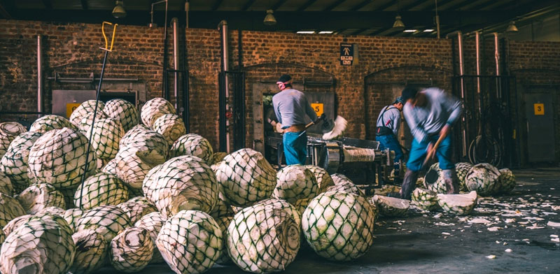 במפעל של פטרון / צילום: יחצ חול