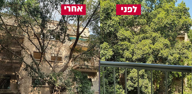 העצים לפני ההרעלה ואחרי ההרעלה / צילום: מתוך עמוד הפייסבוק של ועד הפעולה