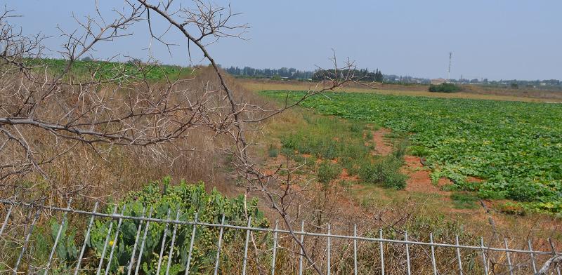 קרקע חקלאית / צילום: גיל ארבל