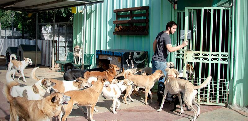"""אביאל קדם, מנכ""""ל עמותת """"צער בעלי חיים רחובות"""" / צילום: """"צער בעלי חיים"""""""