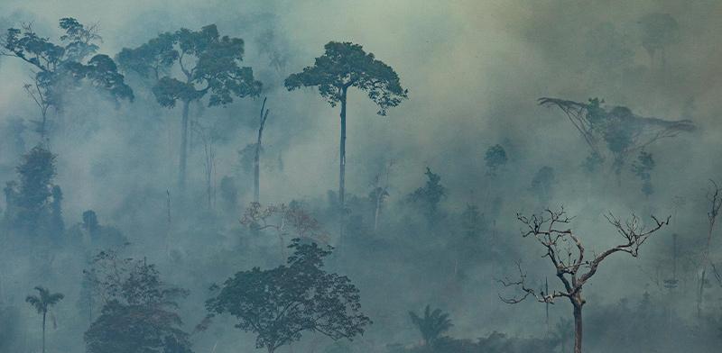 מתוך אסון יערות האמזונס / צילום: Victor Moriyama, Greenpeace