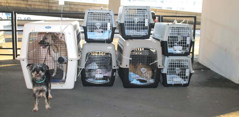 תהליך ההכנה של חיות המחמד לטיסה כולל בדיקות וחיסונים / צילום: Terminal4Pets