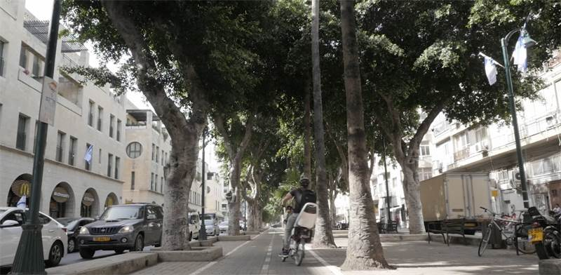 Trees in Jaffa's Jerusalem Blvd.