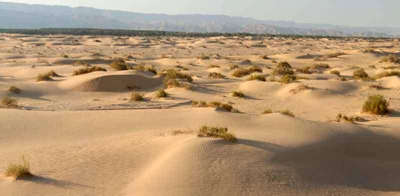 חולות סמר בערבה./ צילום: Ariel Immerman - מתוך ויקיפדיה