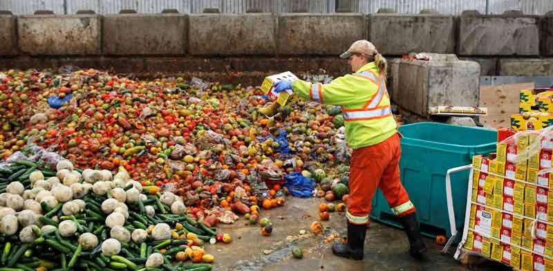 זריקת מזון בקנדה / צילום: רויטרס, Ben Nelms