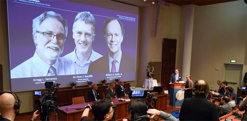הצגת הזוכים בפרס הנובל לרפואה 2019 / צילום: Pontus Lundahl/TT News Agency, רויטרס