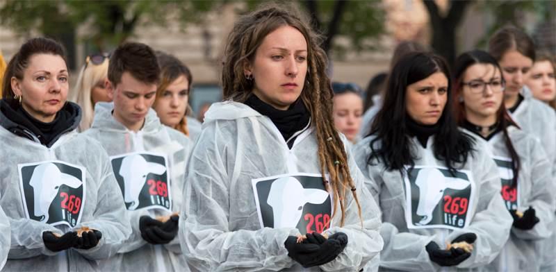 הפגנה של פעילים למען זכויות בעלי חיים / צילום: שאטרסטוק