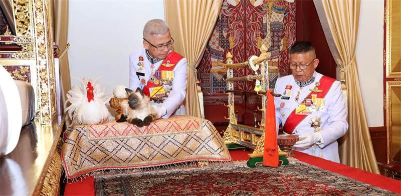 חתול המחלוקת / צילום: The Committee on Public Relations of the Coronation of King Rama