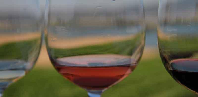 פסטיבל בשביל היין / צילום: אורלי גנוסר