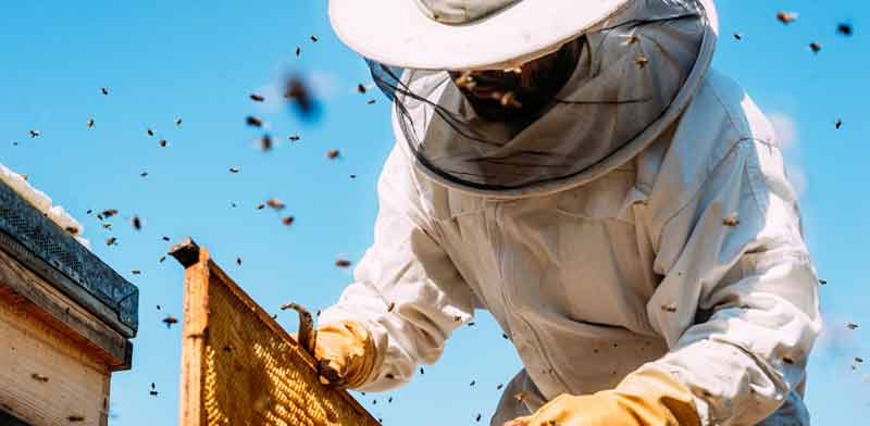 כוורת דבש / צילום: Shutterstock, א.ס.א.פ קריאייטיב