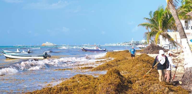 """""""מתקפת האצות"""" בפלאיה דל כרמן, מקסיקו / צילום: Shutterstock, א.ס.א.פ קריאייטיב"""