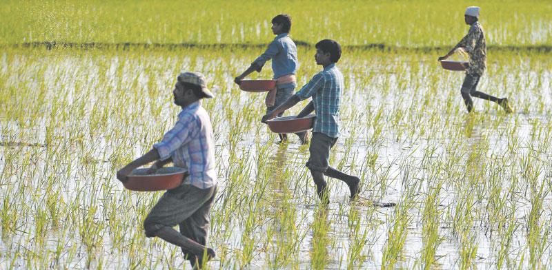 חקלאים בהודו / צילום: רויטרס, Amit Dave