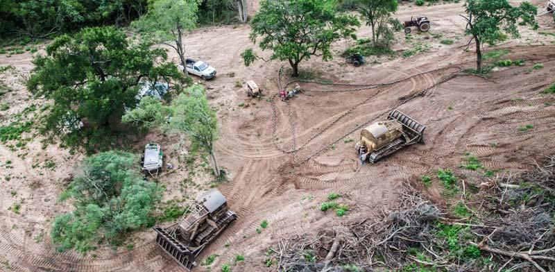 בירוא יערות בארגנטינה / צילום: גרינפיס