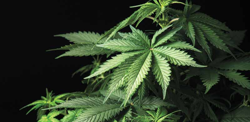 Israel to legalize recreational cannabis use