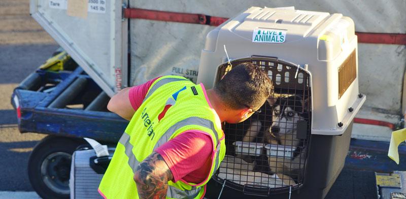 כלב בכלוב הטסה / צילום: Shutterstock, א.ס.א.פ קריאייטיב