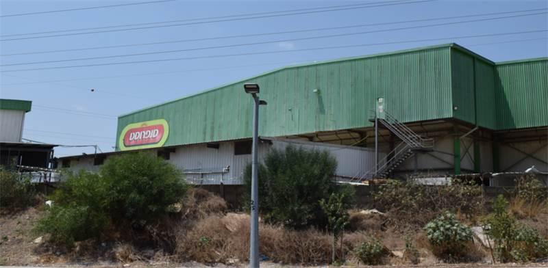 מפעל סנפרוסט במגדל העמק / צילום: בר אל, גלובס