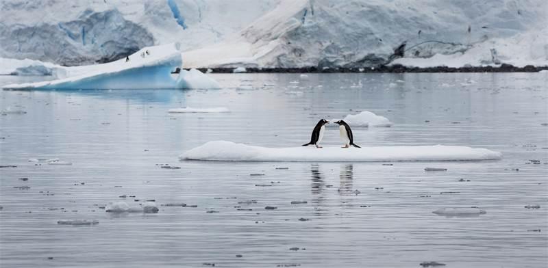 פינגווינים מזן ג'נטו במפרץ פאראדייס באנטארקטיקה / צילום: Abbie Trayler-Smit, גרינפיס