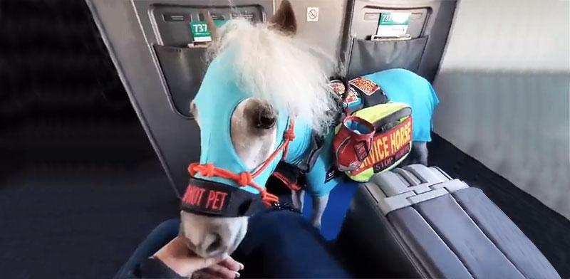 הסוס המיניאטורי פרד / צילום: צילום מסך