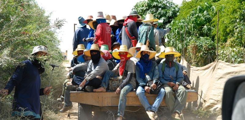 עובדים זרים מתאילנד / צילום: רפי קוץ