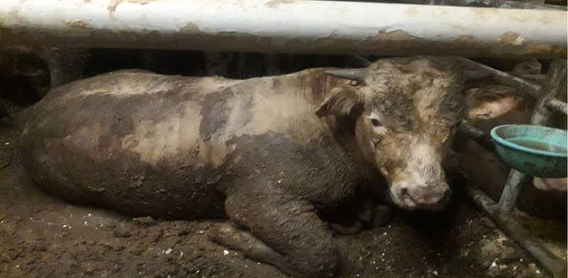 לכלוך וזוהמה בתאי בעלי החיים / צילום: משרד החקלאות