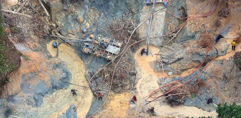 כריתת יערות לא חוקית ביערות האמזונס. הרשויות עוצמות עין / צילום: Chico Batata/Greenpeace
