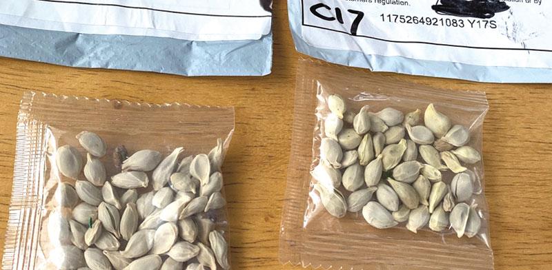 שקיקי זרעים שהגיעו למדינת וושינגטון בחודש יולי. הרשויות בודקות את הזרעים במעבדות / צילום: משרד החקלאות של מדינת וושינגטון
