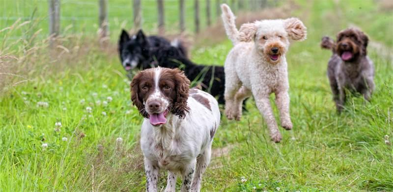 כלבים, אילוסטרציה / צילום: שאטרסטוק