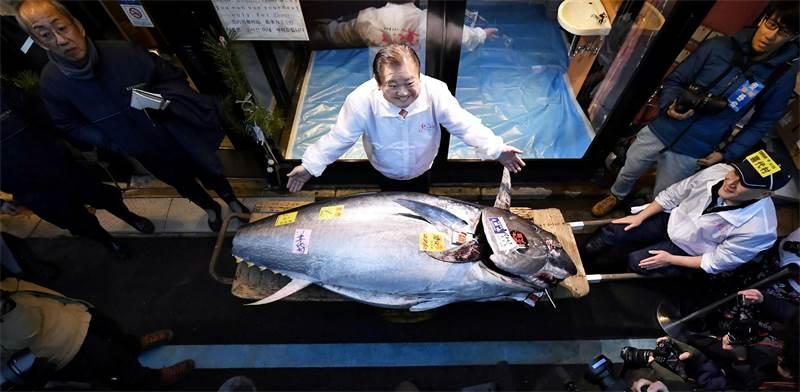 טונה כחול סנפיר במשקל 276 והרוכש המאושר / צילום: Kyodo, רויטרס