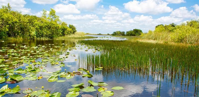 שמורות הטבע בפלורידה / צילום: שאטרסטוק
