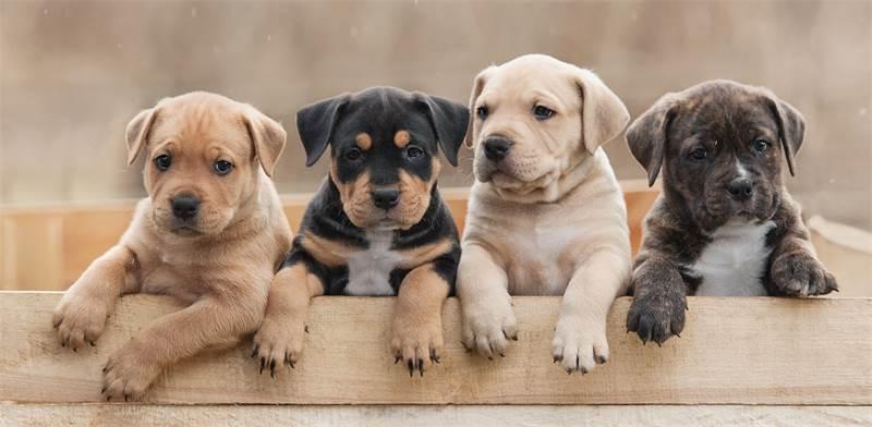 כלבים / צילום: שאטרסטוק