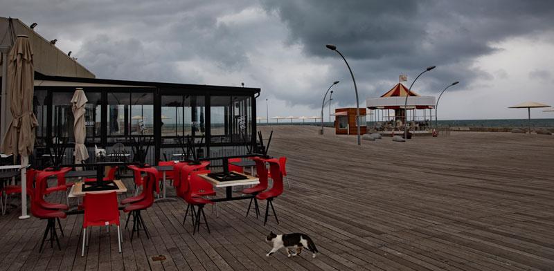 נמל תל אביב / צילום: AP - Oded Balilty