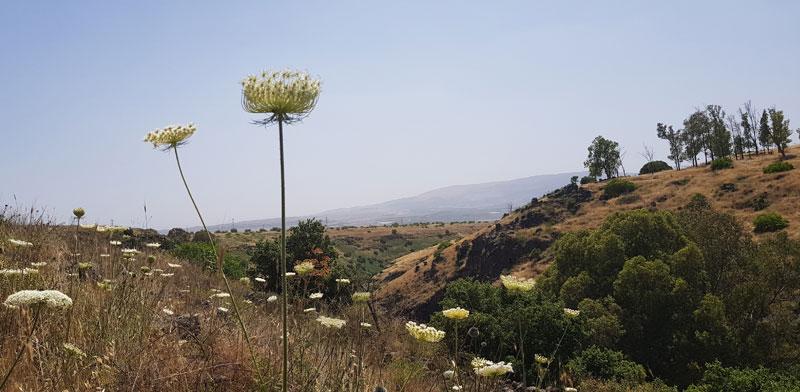 נופי הגולן / צילום: אורלי גנוסר
