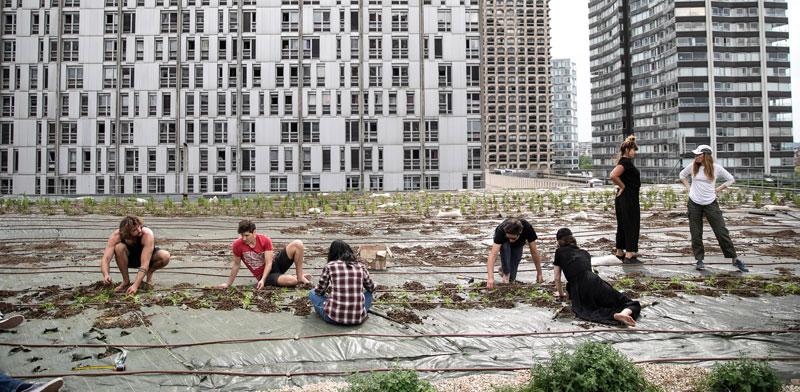 חוות גידול על גג מרכז קניות בפריז. העיר מתכננת להקצות יותר מ־100 דונם לחוות אורבניות / צילום: רויטרס - Yann Castanier