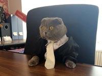 בוסי החתול - אתר Catbox.ro / צילום מסך